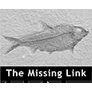 TheMissingLink